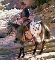 ZIP COCHISE with John Wayne in the movie El Dorado  One of my favorite movies and by far the best horse that John Wayne rode in his movies.