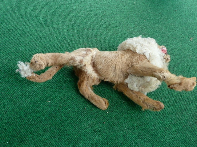 vintage victorian toy taxidermy lion 1800s by joy4charity on Etsy, $175.00Victorian Toys, Victorian Era, Vintage Victorian