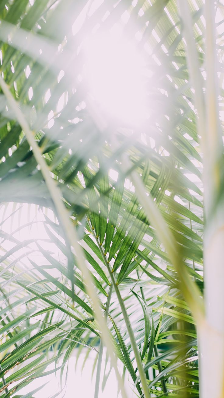 Palm tree ★ Download more tropical iPhone Wallpapers at @prettywallpaper