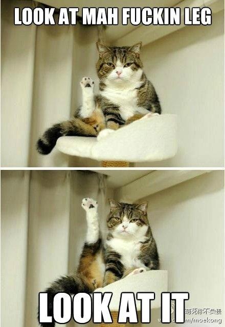 Schau dir mein verdammtes Bein an - Meme Bild | Webfail - Fail Bilder und Fail Videos