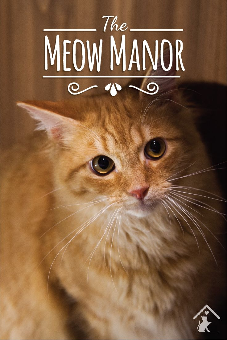 The Meow Manor cat enclosure offers a playful, warm and cozy space that is purrfect for your furry friend! Click the image to find out more. #meowmanor #outdoorcatenclosures #backyardcatenclosures