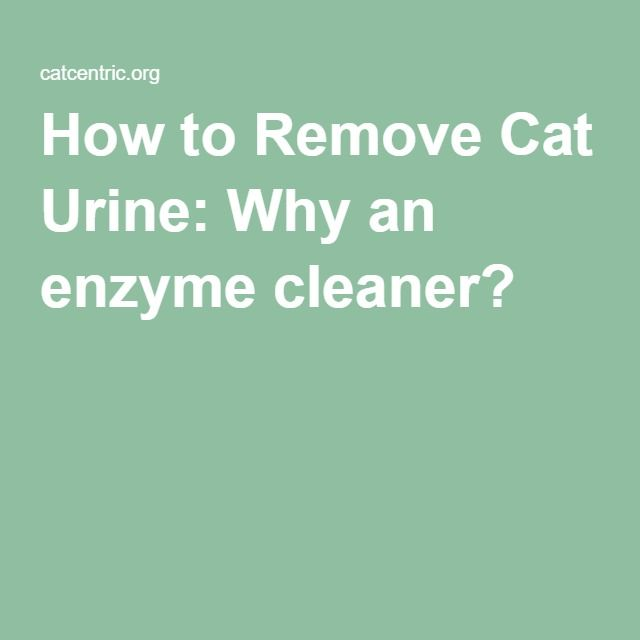 How to Remove Cat Urine: Why an enzyme cleaner?