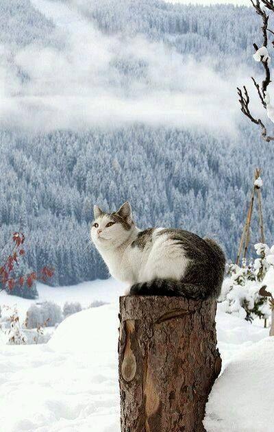 Snowcat:
