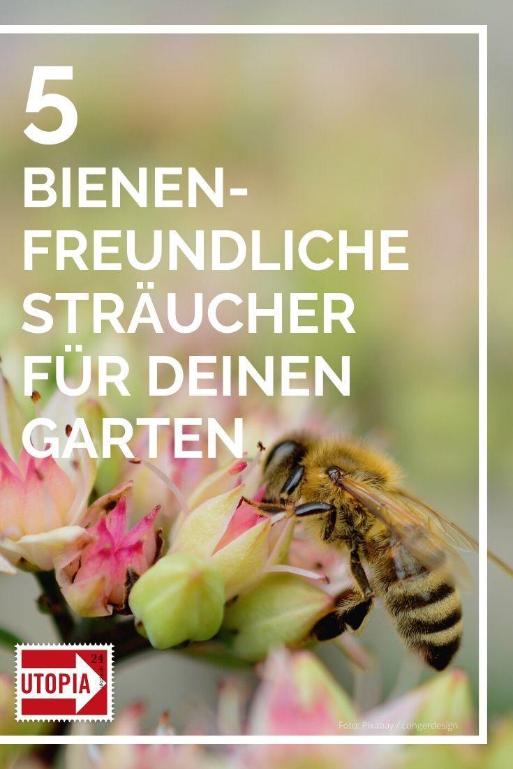 Bienenfreundliche Straucher 5 Vorschlage Fur Deinen Garten Utopia De Bienenfreundliche Straucher Bienenfreundliche Pflanzen Bienenfreundliche Stauden