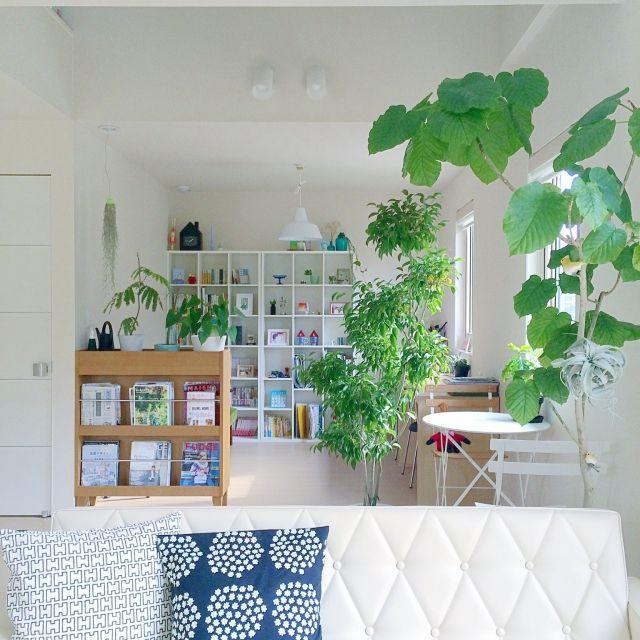masami.hさんの、部屋全体,観葉植物,本棚,ナチュラル,グリーン,窓際,北欧,吹き抜け,多肉植物,カリモク60,ベンジャミン,ウェグナー,エアプランツ,ウンベラータ,キセログラフィカ,のお部屋写真
