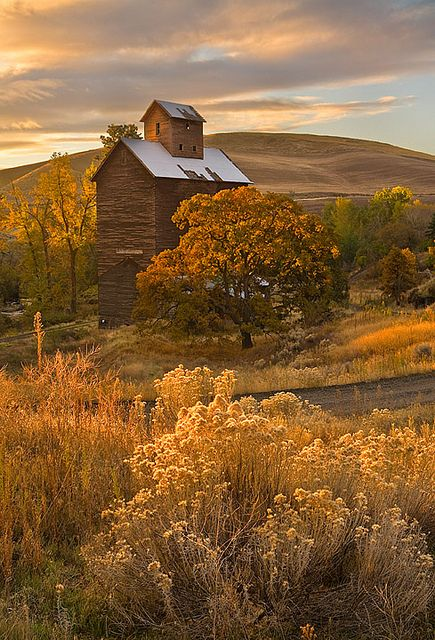 SEASONAL – AUTUMN – fall leaves in brilliant colors decorate the landscape.