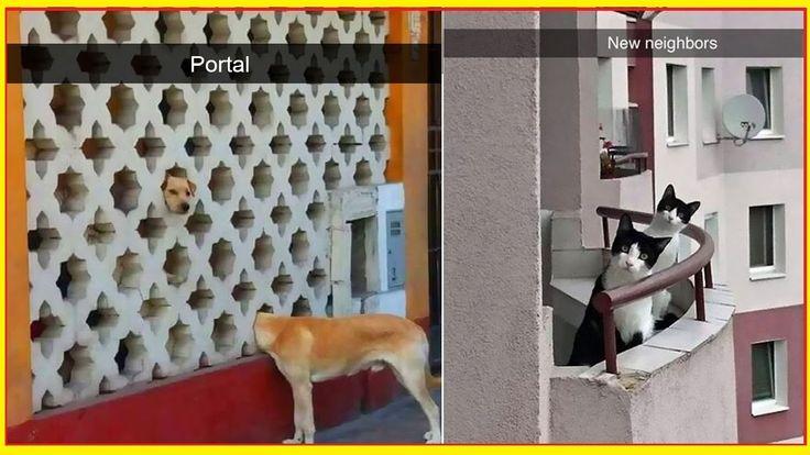 40 Best Vegas Back Yard Images On Pinterest Outdoor Life