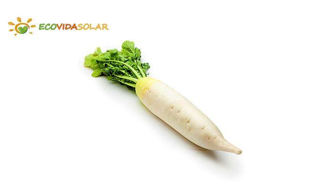 Nabo (Brassica rapa) - Propiedades del nabo