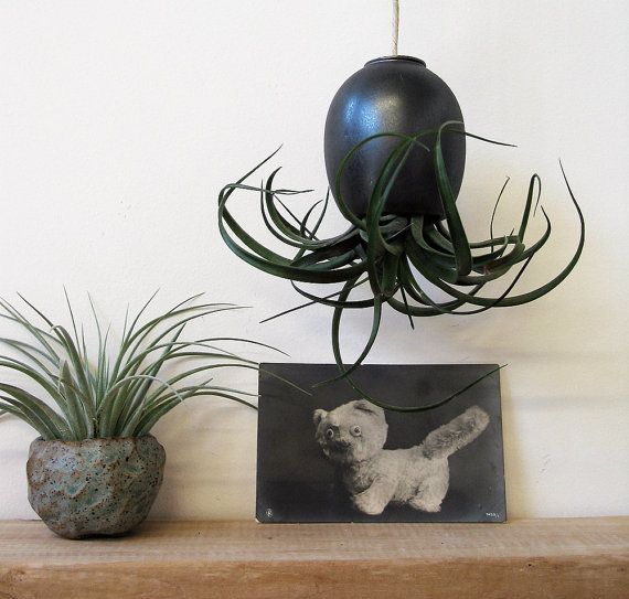 Black Gold Hanging Air Plant Pod Tm Ceramic Planter By Mudpuppy