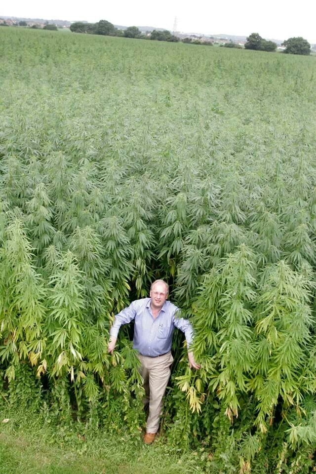 Lyric ganja farmer lyrics : 237 best Jamaica images on Pinterest | Cannabis, Drawings and ...