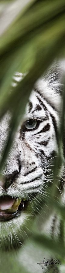 ~When I look into the eyes of an animal, I do not see an animal. I see a living being. I see a friend. I feel a beautiful soul <3