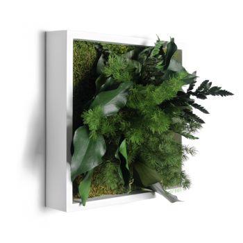 Pflanzenbild 22x22 Cm Natürliche Pflanzen