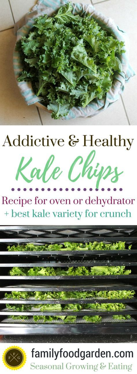 Kale chip recipe for dehydrator or oven