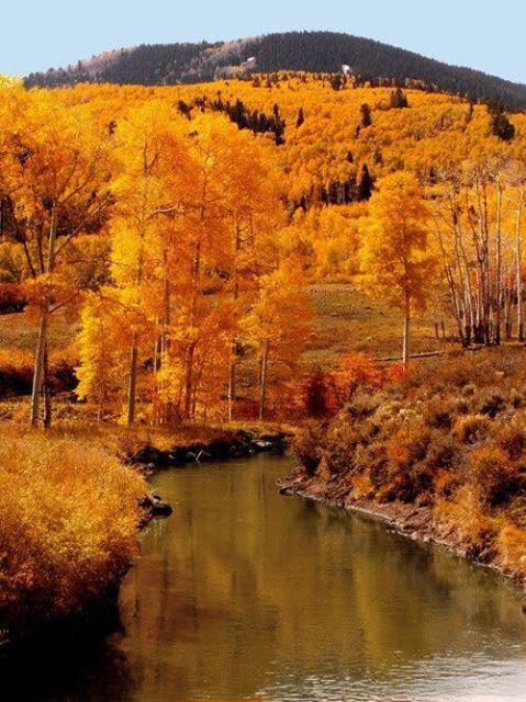 ~Leaves along the river~