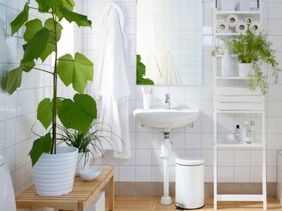 low light bathroom plants 25 best ideas about bathroom plants on plants 19318