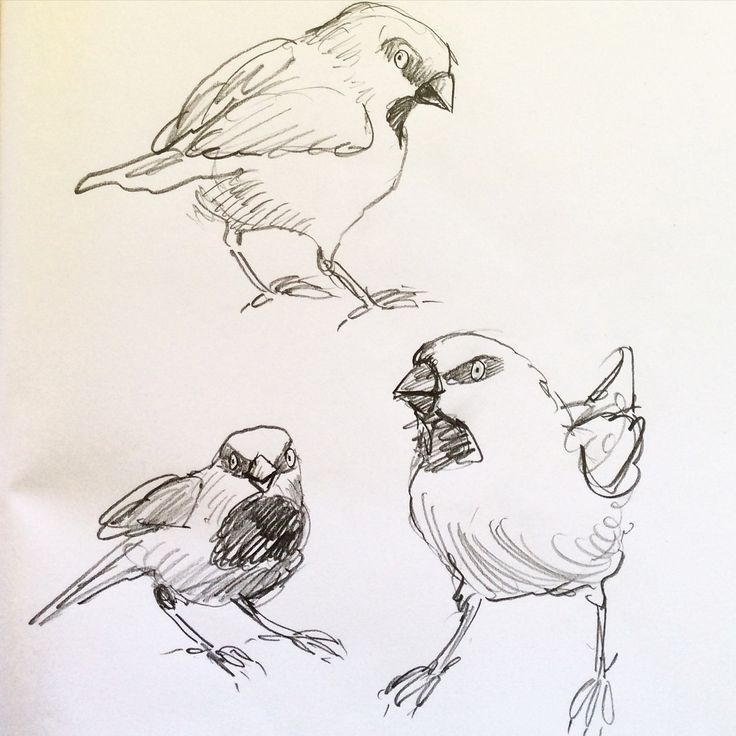 simple pencil sketches of finches done while the kids were playing on the beach. #leonarddoesntdance