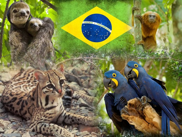 It s hd animals funny wallpapers funny animated gifs - Brazilian Animals Brazilian Animals Photo Card01 Jpg