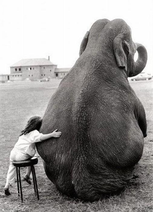 La niña que quería a su elefante  Sólo un niño puede sentir esta despreocupación ante un animal que pesa 6.000 kilos, y tratarlo como si fuera un gato o un perro.  Para que fuera una fotografía perfecta únicamente faltaría que hubiera sido tomada en cualquier rincón de la sabana africana.