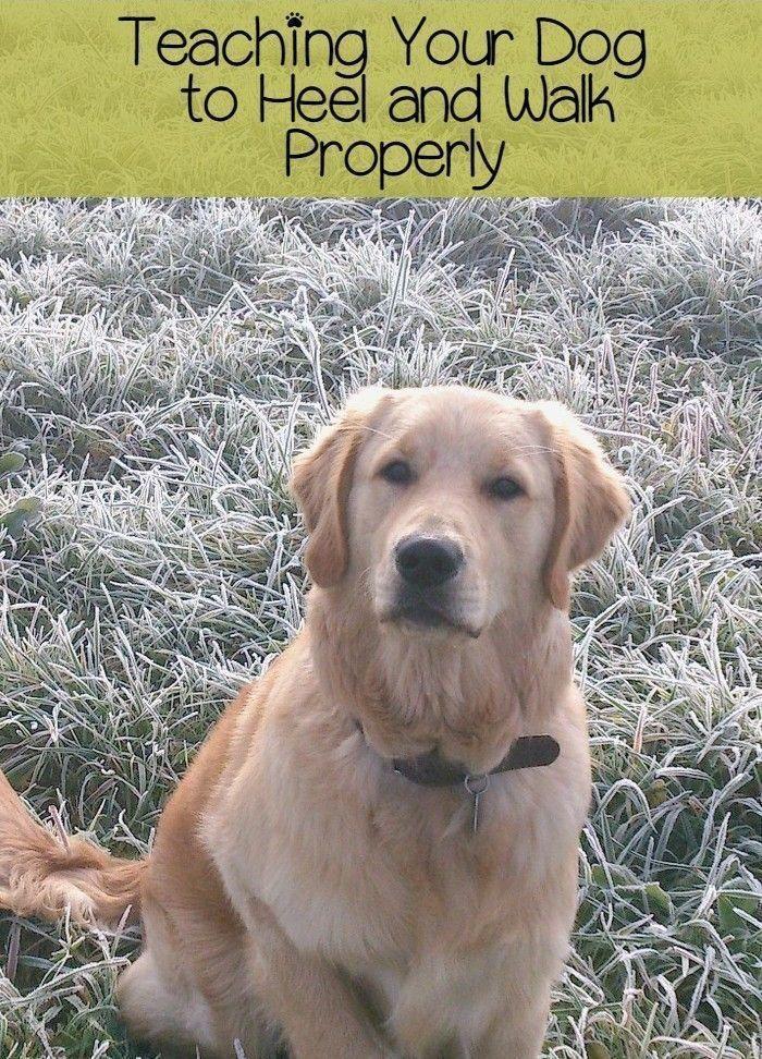 Best Dog Training Tips Dogtrainingomaha 8976014288
