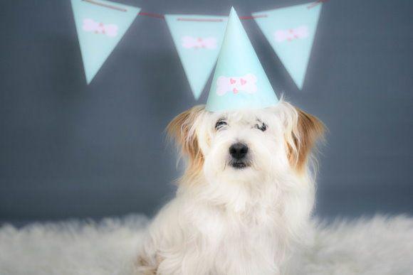 Dog Birthday Party - Hundegeburtstag
