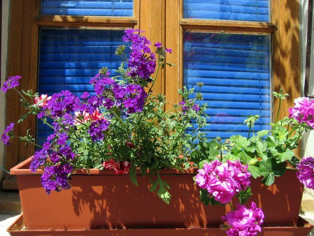Evitez les erreurs lorsque vous composez vos jardinières ! Couleurs des fleurs, besoins des plantes, taille du pot... Nos conseils pour réussir vos compositions.