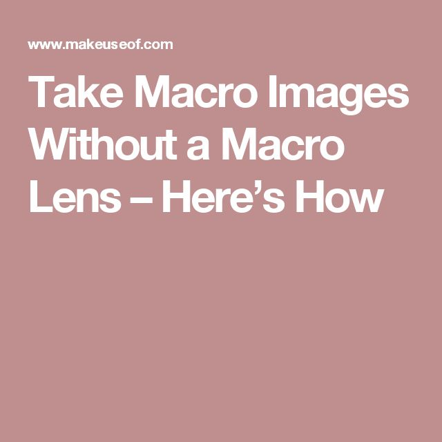 Take Macro Images Without a Macro Lens – Here's How