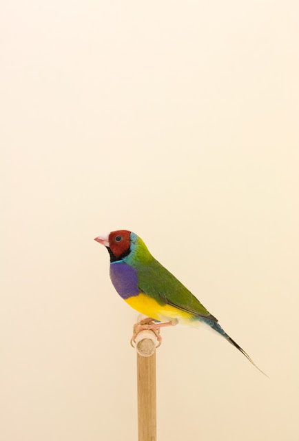 Bird by Luke Stephenson: Colour, Animals, Color, Art, Luke Stephenson, Birds, Photography