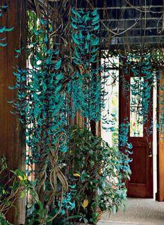 A paisagista Renata Tilli usou a flor da jade como trepadeira sobre a pergola para deixar a entrada aconchegante