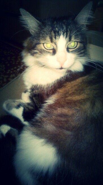 My loveeee !..Cat, Object, Istanbul, Loveeee, Animal