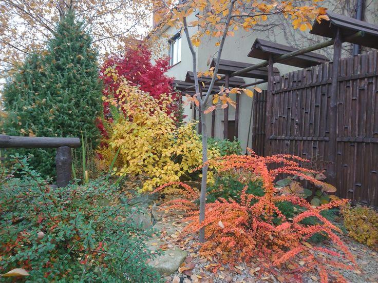 pomarańczowy berberys, żółta kalina i czerwony klonik - jesienny ogród