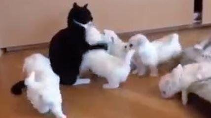 Gatta fa da baby sitter a cinque cuccioli di cane, è un vero assalto