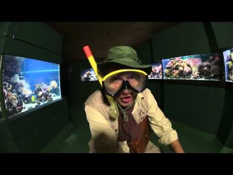▶ Bamboo Bill - Vissenlied (www.jungleclub.nl) - YouTube