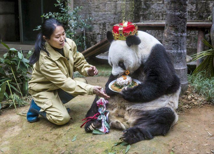 Panda gigante comemora 35º aniversário na China | Mundo | band.com.br - Band.com.br