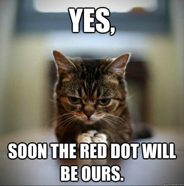 yes cat memes - photo #7