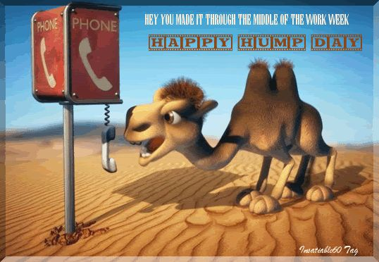 Hey you made it through the middle of the work week! Happy Hump Day! animated wednesday camel hump day happy wednesday wednesday greeting wednesday quote