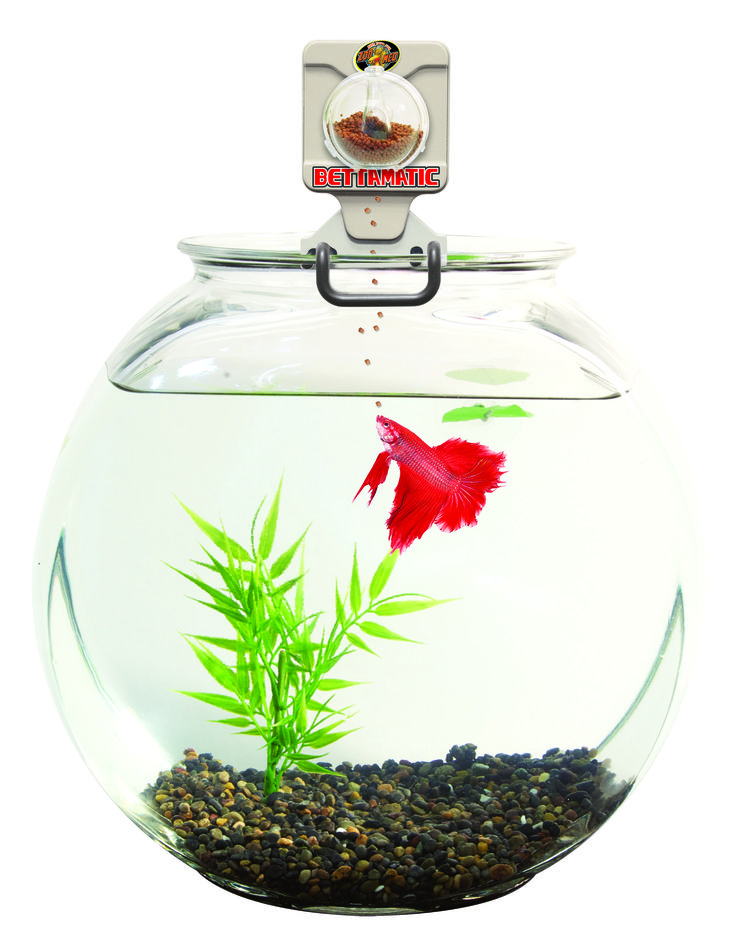 Automatic daily betta feeder betta bling pinterest for Betta fish feeder