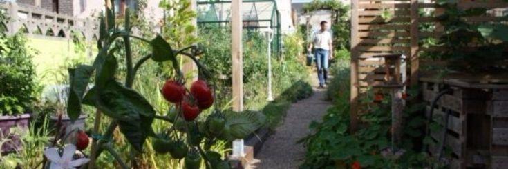 Hoe de productiviteit verhogen in een tuin van 50m²?