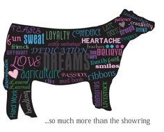 show cow quote | Show Cattle