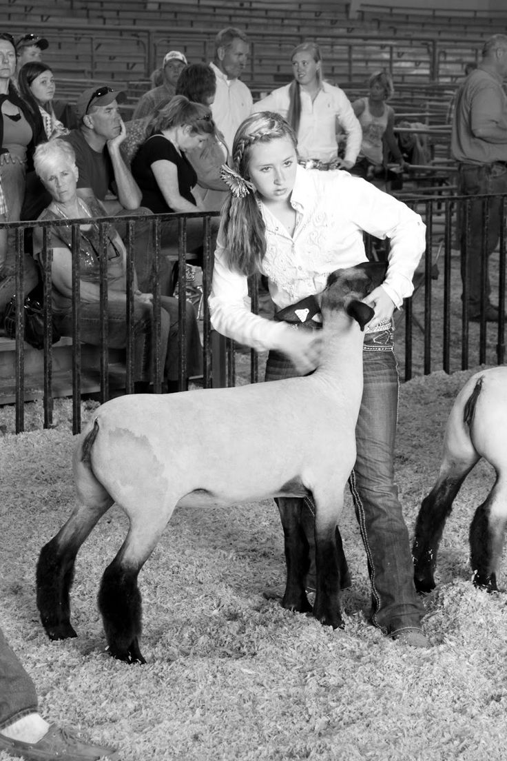 Success is Reason Enough: Why showing livestock matters.