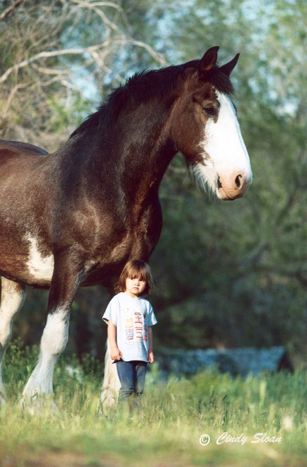 Clydesdale horse and child - I feel like some people underestimate the size of these beautiful beasts