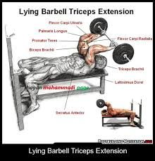 「lying triceps extension」の画像検索結果