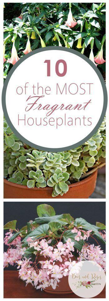 10 der wohlriechendsten Zimmerpflanzen   Zimmerpflanzen, Zimmerpflanze, Zimmerpf…