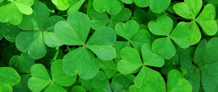 History of St. Patrick's Day | Irish Public Holidays | Office Holidays
