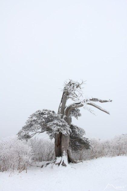 TaeBaek-mountain   겨울 태백산 눈꽃 산행..유일사-장군봉-부쇠봉-문수봉-당골 : 네이버 블로그