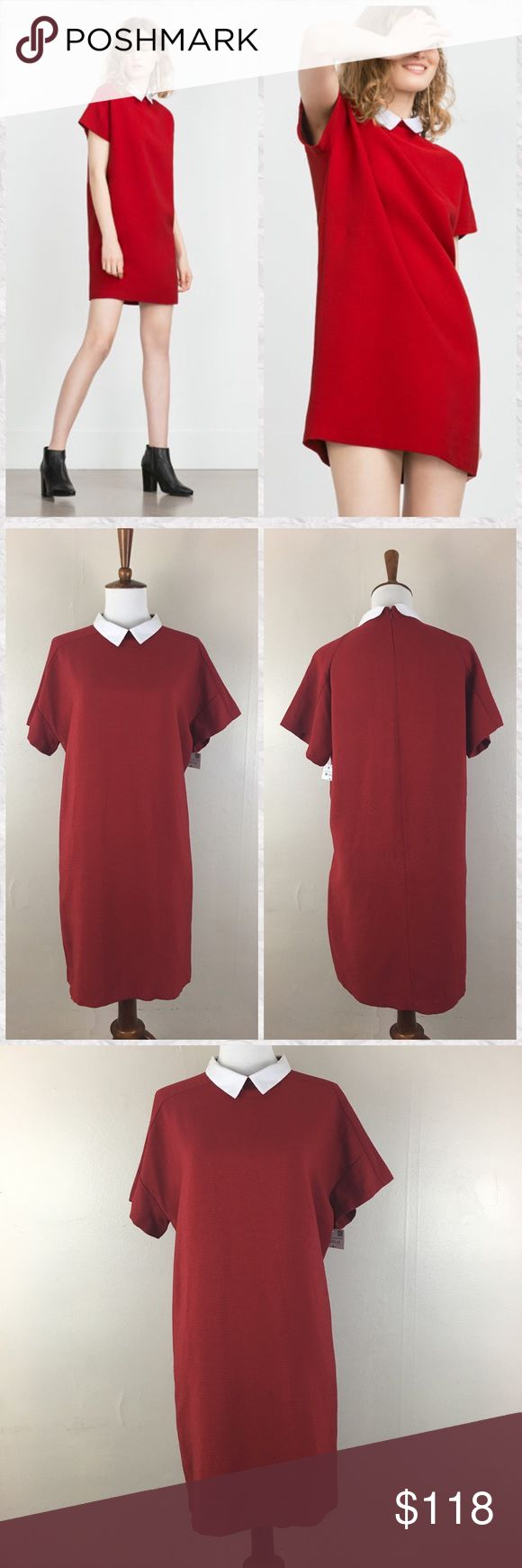 """Zara Red Collared Shift Dress *Condition: NWT. Tags cut to avoid returns. *Tag reads M but runs a bit large in my opinion. Please review measurements *True color is most accurately shown in photos of actual item *Neckline: Collared *Ribbed feel to Fabric *Sleeve Style: Cap *Silhouette: Shift *Back Zip *Pockets: No *Shell: 67% Viscose 33% Cotton exclusive of decoration  *Lining: No *Dry clean *Measurements approx & taken lying flat *Bust: 41"""" *Waist: 40"""" *Hip: 41"""" *Shoulder to Hem: 33.5""""…"""
