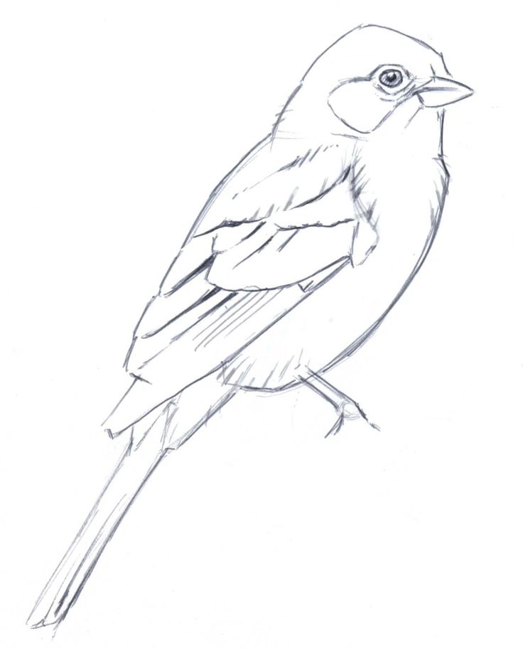 Contour Line Drawing Bird : Best line drawing art ideas on pinterest continuous