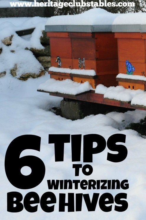 These 6 tips to winterizing bee hives will give you and your bees the boost they need to get through the winter months into spring and blooming flowers! FREE Checklist to help you get your bees ready for winter!