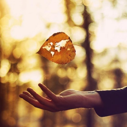 I'd rather regret something I've done, rather than regret something I never did.: Stunning Photography, Fall Leaves, Amazing Photography, Natural Photography, Autumn Leaves, Mothers Earth, Joel Robison, World Maps, Fall Photo