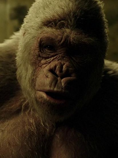Free Online Streaming War for the Planet of the Apes_Full_Movie