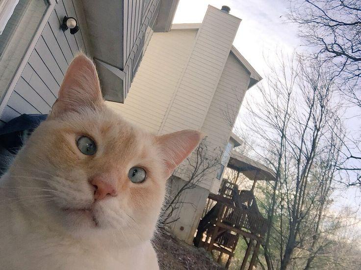 internet famous cats